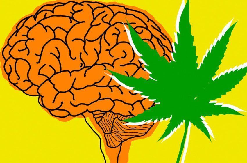 A relação da cannabis e o estresse