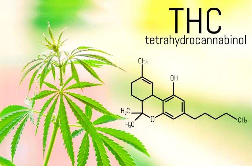 THC é remédio! Parem com o preconceito