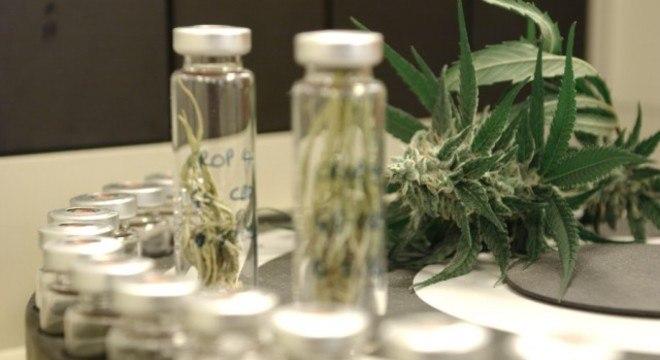 Anvisa divulga novo código de importação de produtos à base de cannabis