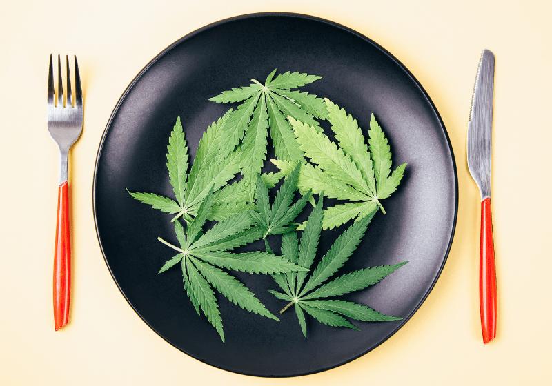 Anorexia: a cannabis pode ajudar no tratamento?