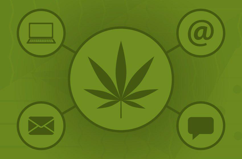 Site de cannabis é o segundo link mais acessado no Facebook, segundo levantamento