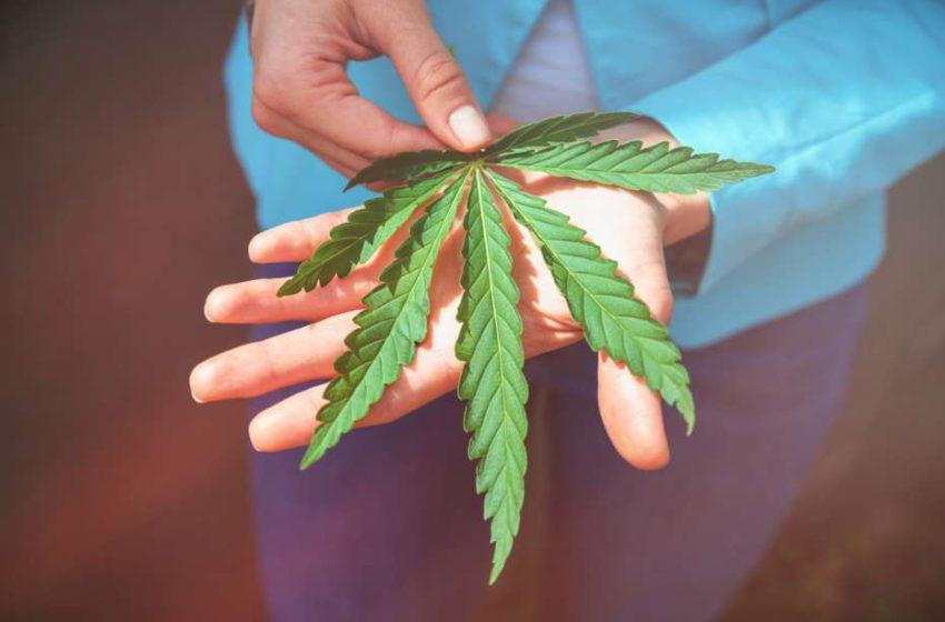 Investidores holandeses pretendem financiar pesquisas de cannabis medicinal para tratamento de epilepsia